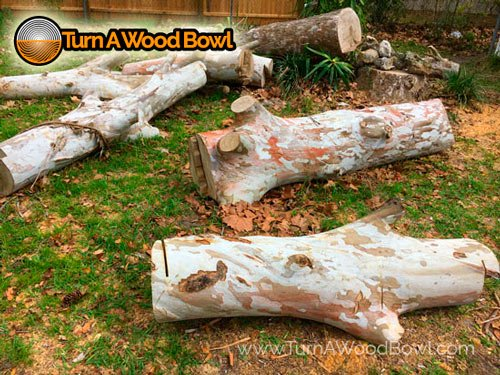 Free Wood Sycamore Found Craigs List