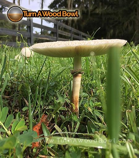 Mushroom Fungi Network Below